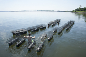 oystercages